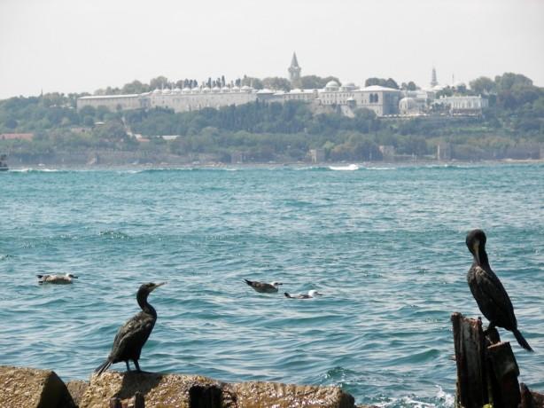 Cormoranes Estambul