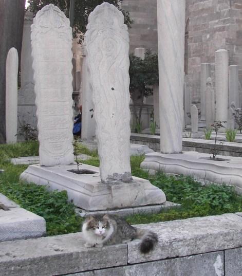 Gatos en Estambul
