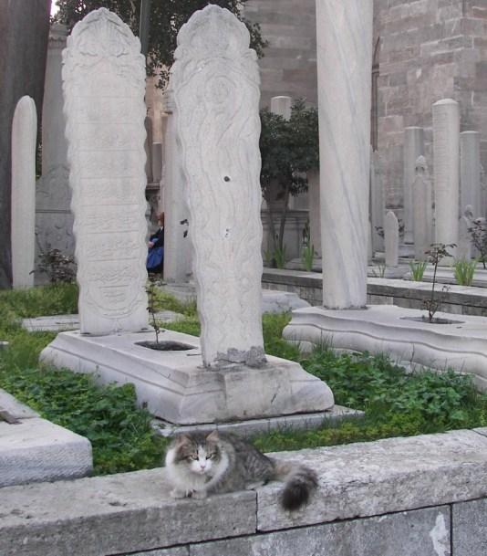 Gatos en cementeriors
