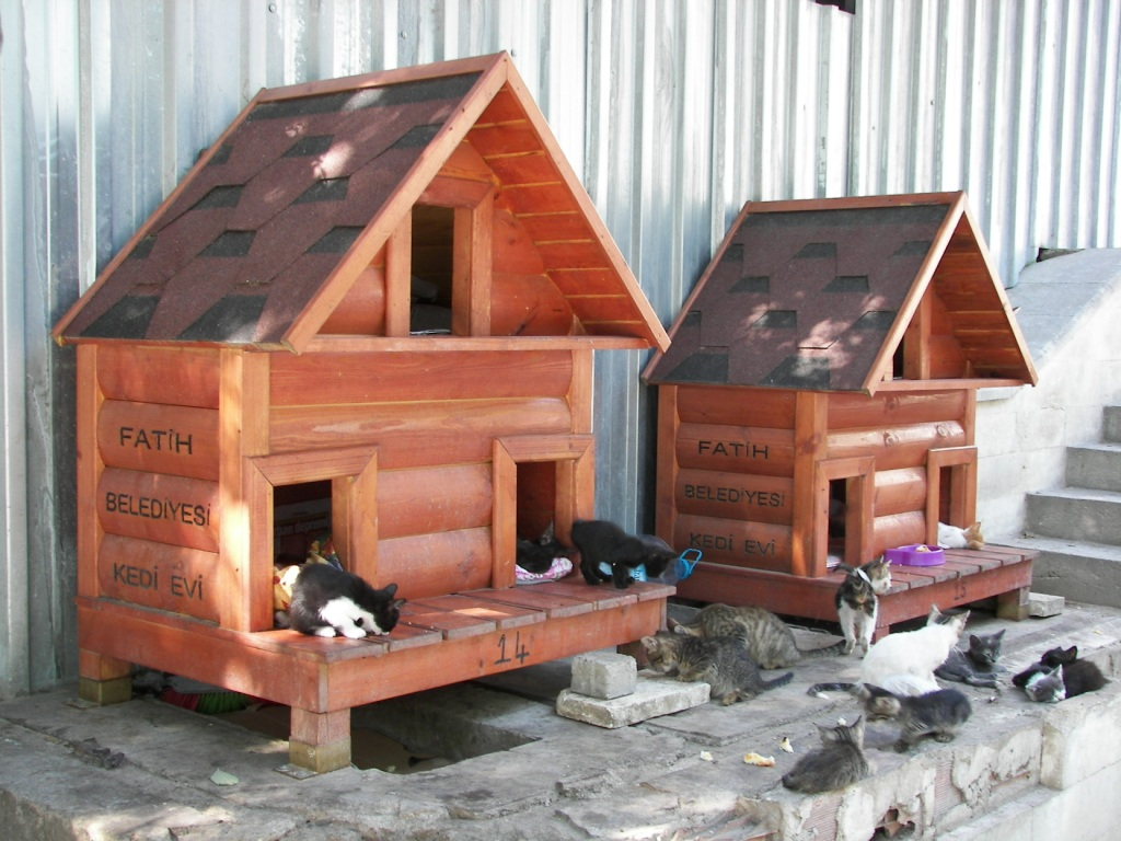 Gatos en estambul planeta estambul - Casas para gatos de madera ...