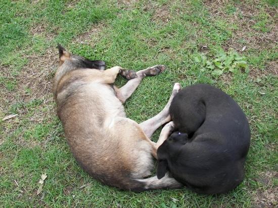 Perros callejeros Estambul