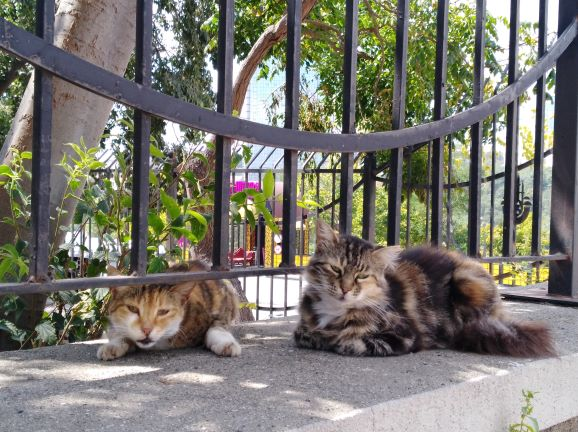 Gatos en Estambul